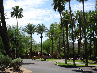 Palm trees at Rancho Manana Resort in Cave Creek.
