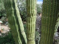 Close-up of cactus.