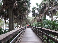 Wooden boardwalk.