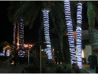 Blue lights wrapped around palm trees at Hendry's Beach.