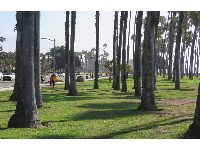 The amazing palm trees next to the bike path.