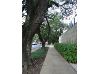 Row of trees outside the museum.