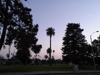 Silhouette of the amazing old trees at Plaza Park.