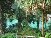 Looking through the trees at the blue-green water.