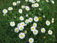 Daisies in the grass. I love these!