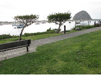 Bench, strange trees, and Morro Rock.
