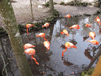 Flamingoes galore!