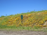I love these flowers, where Highway 246 meets Highway 154!