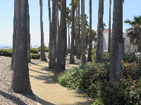 Oasis of palm trees near the Marine Studies building.