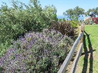 Lavendar and fence and sea in the distance.