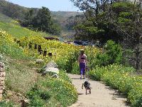 A mom and child walk the flower-lined path.