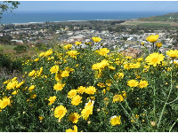 Flowers, town, and sea.
