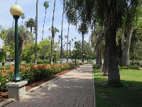 Walkway with roses, lamps, and palms in a row.
