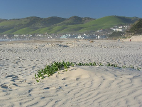 Delightful green hills and white dunes at the beach by the butterfly preserve.