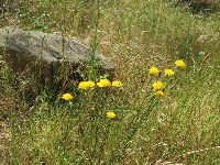 Yellow flowers and rock.