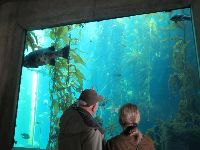 Looking at the Kelp Forest tank.