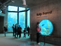 The Kelp Forest is a beautifully designed spot.