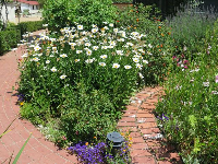 Little walkway amid the flowers, at Leonis Adobe.