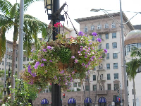 Flower baskets on Rodeo Drive.