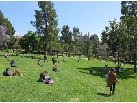 The sloped lawn beside Janss steps, full of students catching some sun.