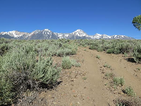 There are many trails criss-crossing behind Fish Springs Hatchery.