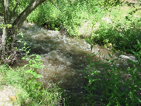 Birch Creek, which you can walk to on the trails, after a large summer snow melt.