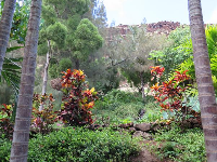 Lush vegetation and the hillside.