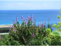 Purple flowers and the sea...