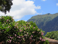 View of plumeria tree and mountains, from the access path.