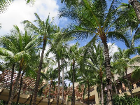 Palm trees galore at Royal Hawaiian Center.
