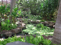 Pond and lush gardens at the Royal Hawaiian Center, a shopping center near the hotel.