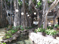 Stream under the banyan tree.