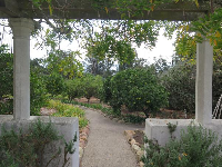 Looking toward the orchard from the herb garden.