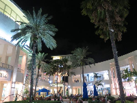 Palm trees in the center of the mall.