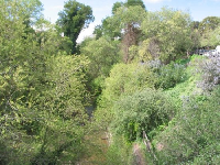 Creek and vegetation, seen from the swinging bridge.