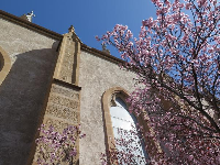 Loretto Chapel and cherry tree.