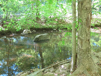 The tranquil creek.