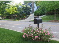 Mailbox with pink roses around it, on Meadowmont Lane.
