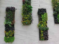 Garden on the wall!