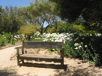 A bench beside flowers.