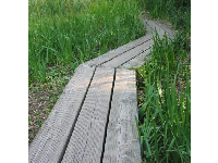 The wooden platform in the marshland area of the gardens- fun for kids to walk along!