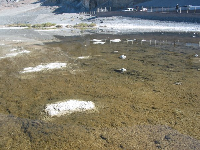 The bad water at Badwater.
