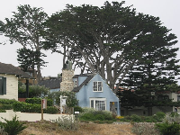 Lovely house and Monterey Cypress tree.