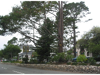 Trees in the median strip.