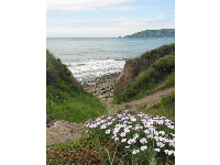 Daisies, and path to the beach...