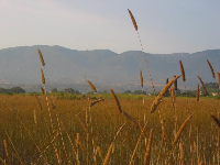 Thin golden grasses and the Santa Ynez mountains in the background.
