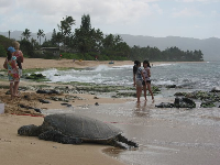 A turtle lazes in the sand, while girls play by the shore.