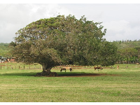 The horse paddock just south of Turtle Beach.