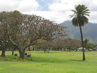 Shade trees and  more lawn to picnic on.