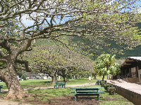 The gnarled trees at Manoa Valley District Park.